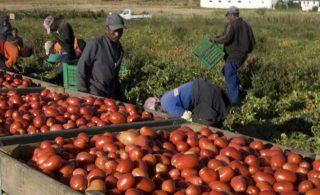 Il boicottaggio contro i supermercati che sfruttano lo schiavismo dei migranti