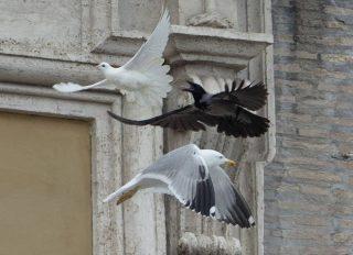 La colomba del Papa aggredita: più cautela nell'uso dei simboli